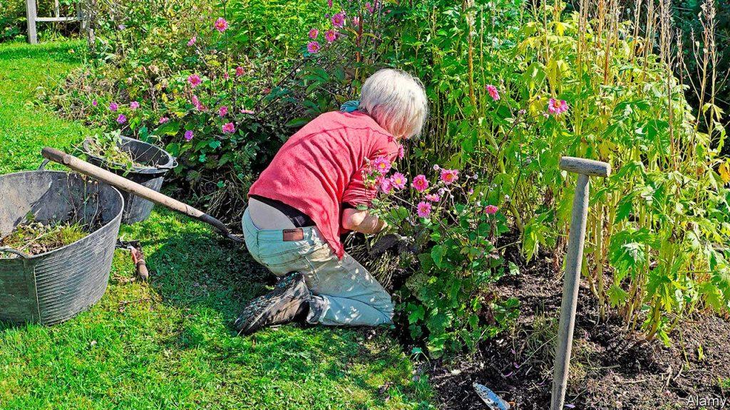 Fixa i trädgården